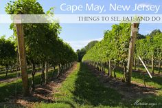 Cape May, New Jersey | Things to do and see and places to eat and drink! #capemay