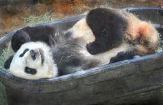 Tub o' panda by Stinkersmell, via Flickr