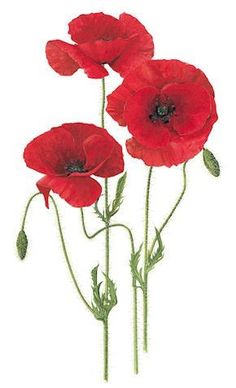 Red red poppies <3 love them <3