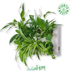 SubitHOH! Quadro Vegetale Pronto da Appendere. Composizione a Vostra Scleta Herbs, Herb, Spice