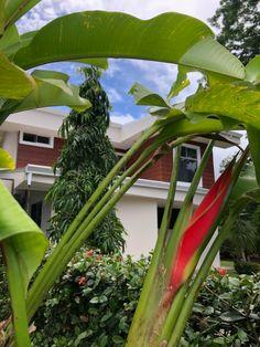 My Dream Home, Costa Rica, Beach House, Beach, Home, Beach Homes, My Dream House, Beach Houses