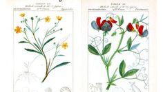 Free Graphics: Set of 4 French Botanical Taxonomy Prints circa 1819