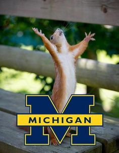 We love our Michigan squirrels