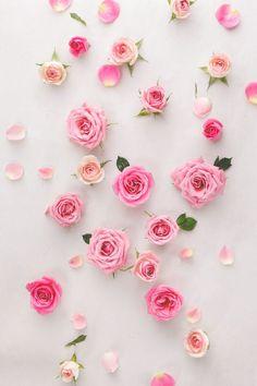 Fondo flores rosas