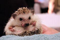 Hedgehog Spots Something Delicious