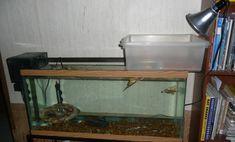 Plastic Container Turtle Dock - petdiys.com