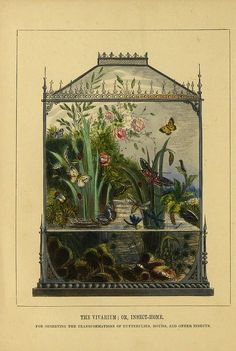 "themagicfarawayttree:""The Vivarium or Insect-Home: For Observing the Transformation of Butterflies, Moths and Other Insects""n7_w1150 by BioDivLibrary on Flickr (cc)"