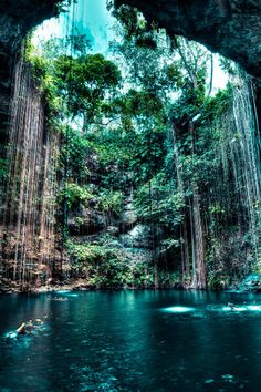 Ik Kil cenote. Breathtaking...especially when you jump from 12 feet up into the water