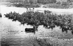 our Reinforcements on horses in the HUTT RIVER at Trentham - The Hutt, City Library, Princess Cruises, World War One, Old Pictures, New Zealand, Horses, River, Kiwi