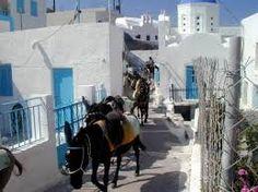 Αποτέλεσμα εικόνας για postcards from lindos of donkeys