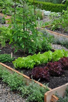Beautiful vegetable gardens. #victorygarden