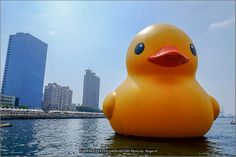Rubber Duck. | Flickr - Photo Sharing!