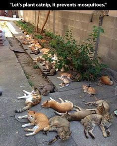 Well, that's one way to round up all of the neighborhood strays.