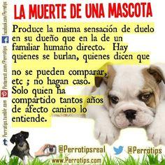 No hagas caso de aquellos que no entienden tu dolor. Ellos no saben de amor canino #perrotips