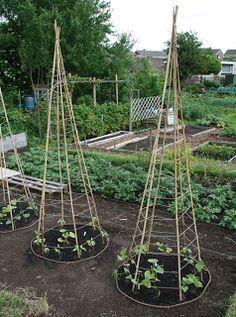 Kid Garden Idea: Bean Teepee - CafeMom Mobile