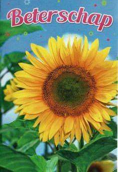 Beterschap!  Zonnige beterschapskaart met zonnebloemen
