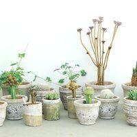 風の谷のナウシカの腐海の植物のような、不思議な魅力をもつ植物を扱うショップ5選