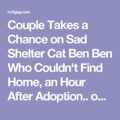 Couple Takes a Chance on Sad Shelter Cat Ben Ben Who Couldn't Find Home, an Hour After Adoption.. on 9GAG