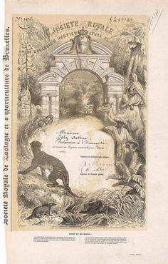 Société Royale de Zoologie d'Horticulture et d'Acrement de Bruxelles Action 1. Emission 500 Frs. von 1851. Gründeraktie (Auflage 1200).