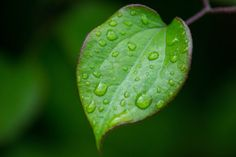 A nice leaf with raindrops.
