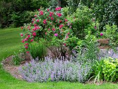 Companion plantings for rose bushes can add a nice touch to the rose bed. Companion planting can serve multiple purposes in the rose bed. Learn about companion for roses in this article.