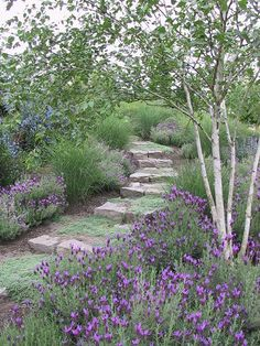 stone path through the lavender