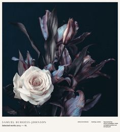 samuel burgess johnson, album art, album, album cover, album artwork, rose