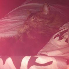 Cookie sleeping