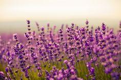 Intégrer l'aromathérapie et ses bienfaits au quotidien