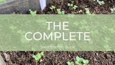 The Complete Seed Starting Guide - Misfit Gardening Bee Traps, Paper Pot, Cold Frame, Room To Grow, Seed Packets, Garden Seeds, Plant Needs, Potting Soil, Seed Starting