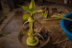 Delicate, Flowers, Plants, Beautiful, Royal Icing Flowers, Flower, Florals, Plant, Bloemen