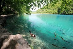 Plitvice Lakes National Park, Croatia (photo @jonathanquique) Plitvice Lakes National Park, All Pictures, Croatia, Places To Travel, National Parks, Europe, River, Outdoor, Outdoors