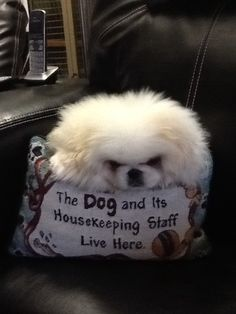 That is exactly correct! Pekingese