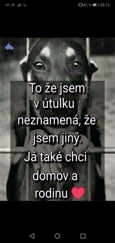 Cute Dogs, Texts, Sad, Motivation, Quotes, Boxers, Animals, Quote, Quotations