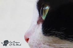 Cat Picture Of The Week: Cat With Big Eyes