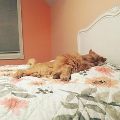 Young Woman Gave Cat a Forever Home. The Kitty Repaid Her Love by Saving Her Life Lots Of Cats, Ginger Cats, Save Her, Young Women, Shelter, Kitty, Woman, Life, Little Kitty