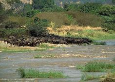 Masai Mara: one of the best known and most popular reserves in the whole of Africa.