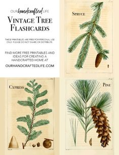 Encourage kids to explore and discover the world around them with these Vintage Inspired Science and Nature Flash Cards. If you are homeschooling or unschooling, these vintage Science flash cards would work perfectly with the Charlotte Mason curriculum or really any science and nature study. This homeschool idea is perfect for elementary students of all ages. Download and print bird, leaf and tree, and flower flash cards for kids.  Vintage Science and Nature Flash Cards - Our Handcrafted Life...