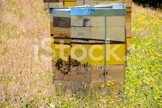 Beehives in Summer royalty-free stock photo Stock Imagery, Summer Photos, Image Now, New Zealand, Royalty Free Stock Photos, Profile, Yellow, Twitter, World
