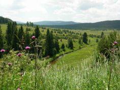 Zhůřská hnízdiště - Národní park Šumava Parc National, National Parks, Magical Forest, European Countries, My Heritage, Mountain Range, Czech Republic, Prague, Vineyard