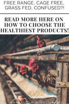 """WAS THAT """"CAGE FREE"""" CHICKEN HAPPY? WAS THAT """"CAGE FREE"""" CHICKEN HAPPY? Free-range, cage-free, grass-fed, CONFUSED?!"""" """"Read more here on how to choose the healthiest products! #Chicken #CageFreeChicken #HappyChicken #HealthyEating #Nutritionist #FreeChicken #ChickenProducts Healthy Eating Plate, Healthy Eating Tips, Health Tips, Health And Wellness, Womens Health Care, Free Chickens, Free Range, Organic Skin Care, Confused"""