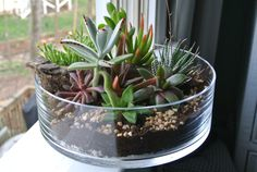 The Grande Green - Succulent Terrarium, DIY , Centerpiece , Planter, Wood, Vase, All Included, Gift