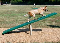 Dog Teeter Totter | The Dog Teeter Totter offers the challenge of a dog agility obstacle that the dog must control. Once mastered, the Dog Teeter Totter helps boost balance and confidence.