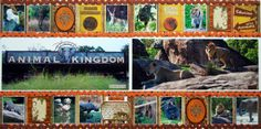 Animal Kingdom or an zoo page. The panorama make this layout plus this is great use of all the far away photos we try to get of all the animals!