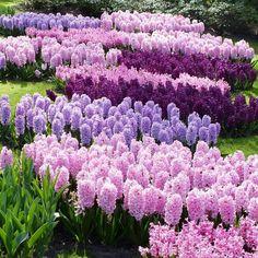 Ich brauche keinen Herbst und Winter ... Für mich darf's bald wieder Frühling sein. :)
