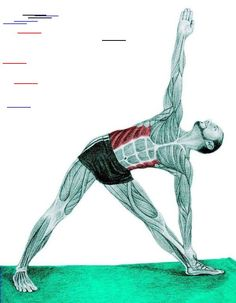 So what kind of muscles do you stretch when you do yoga? Look at these stretching exercises with pictures do find out - Vicky Tomin is a Yoga exercise Muscle Stretches, Stretching Exercises, Yoga Sequences, Yoga Poses, Hata Yoga, Yoga Anatomy, Weight Training Workouts, Kundalini Yoga, Yoga Routine