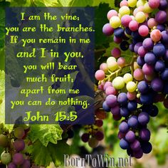 I Am The Vine You Are Branches Abide In Me John 155