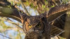 Petition update · Owls 2nd Chance Public Re-Hearing Twin Lakes - Weds Jan 18 - 5pm · Change.org