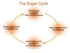 The sugar cycle - low carbohydrate low carb Body Cells, Lose Weight, Weight Loss, Water Retention, Low Fat Diets, Training Day, Banting, Food Plan, 200 Calories