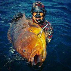 Big dusky grouper